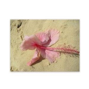 beach-paintings-outdoor-art-hibiscus-flower
