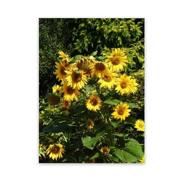 metal-sunflower-wall-decor