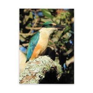 nz-kingfisher-patio-and-garden-art