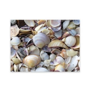 outside-art-panels-shells-garden-art