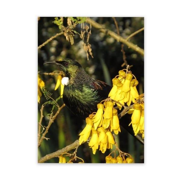 tui-gold-kowhai-flowers-large-garden-art