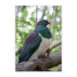 art-for-garden-fence-kereru-wood-pigeon