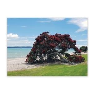 beach-themed-decor-ideas-pohutukawa-omana